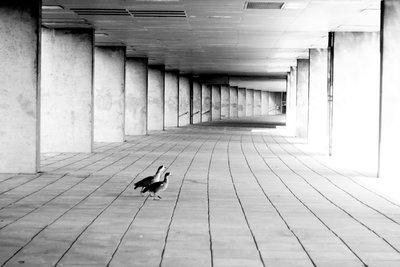 Why do birds suddenly III